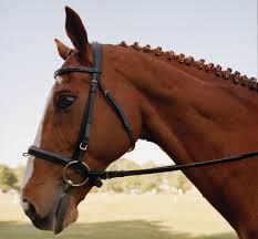 all the pretty horses the massachusetts equestrian scene boston  all the pretty horses essay all the pretty horses the massachusetts equestrian scene