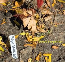 502 Best Garden DelightsFall Gardening Images On Pinterest Fall Gardening