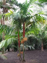 Palm Tree Orange Fruit