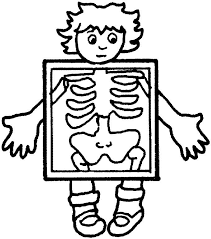 Small Picture Human Body Outline Printable Clipartsco