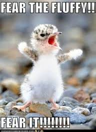 Cute,fluffy and funny animals on Pinterest | Fluffy Animals ... via Relatably.com