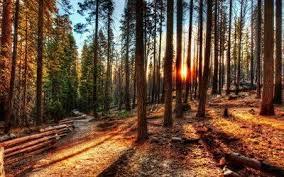 Жизнь леса доклад класс ДоклаДики Жизнь леса доклад 4 класс