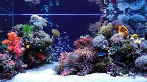 Aquarium Wallpapers Hd