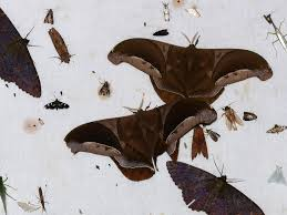 What Did Moths Do Before Lights Like A Moth To The Flame Why Moths Are Attracted To Light