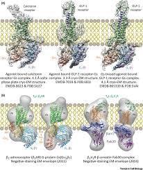 Gpcr Signaling Illuminating Gpcr Signaling By Cryo Em Trends In Cell Biology