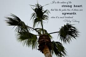 Palm Tree Quote Insanity Is Not An Option