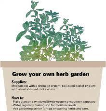 herb gardens flourish in small urban spaces