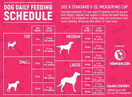 Puppy Eating Chart The Ultimate Dog Feeding Schedule Time And Chart