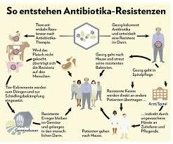 Keime im darm nach antibiotika