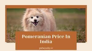 Pomeranian Dog Price In India 2021 ...