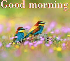 237 Good Morning Wishes On Wednesday Quotes Images Wallpaper Photo