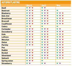 veg garden calendar autumn harvest and planting guide kiwi living nz