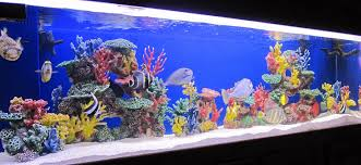 Fish Tank Accessories And Decorations Amazon Instant Reef Artificial Coral Reef for Aquarium Decor 83