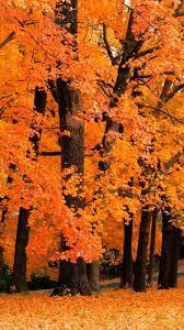 Free Amazing Fall Wallpaper Backgrounds ...