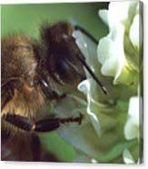 Honeybee Closeup #2 Photograph by Aubrey Moat