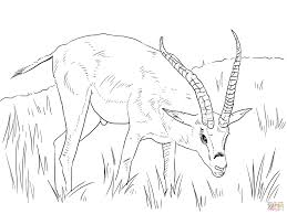 Small Picture Safari Animals coloring pages Free Printable Pictures