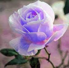 Flores para mi amor yorlanys - Home | Facebook