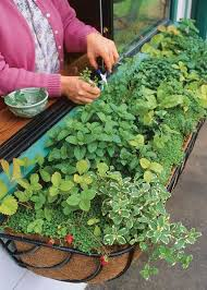a guide to planting the perfect window box herb garden