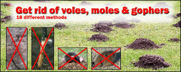 how to get rid of voles in garden.  Rid With How To Get Rid Of Voles In Garden F