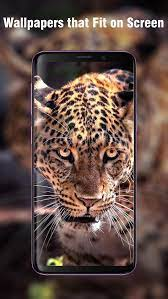 New HD Animal Wallpapers for Android ...