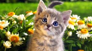 cute cats wallpapers free download. Unique Wallpapers Cute Cats Wallpapers Free Download On L