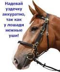 Уздечка своими руками для лошади видео