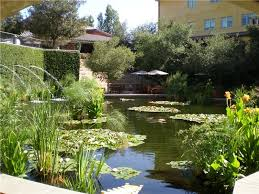 This koi pond is designed well. It holds plenty of water, has fountains for  aeration, and has lots of plants that provide the fish with food, ...