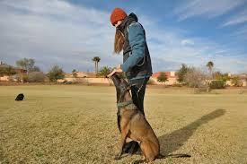 Hasil gambar untuk teach dog