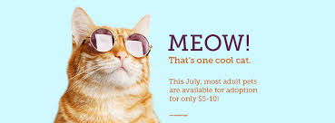 Summer Season brings <b>Cool Cats</b> and Hot Dogs - City of Huntsville
