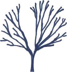 Train A Tree For Free Pruning For Cordon Espalier Fan Espalier Fruit Tree Shapes
