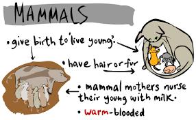 Kids Corner Animal Classification All