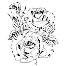 Free printable roses coloring pages for kids. Top 25 Free Printable Beautiful Rose Coloring Pages For Kids