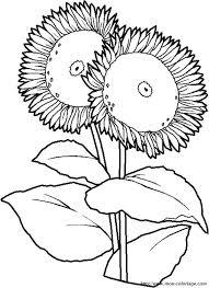 Colorare Fiore Disegno Girasole