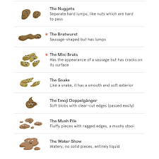 A Guide To Your Dogs Poop Heed Foods