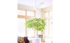 sunroom lighting. Modern Ceiling Fan, White Throw Pillows, Sunroom Lighting