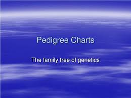 Ppt Pedigree Charts Powerpoint Presentation Free Download