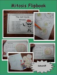 cell cycle flip book mitosis activity math in demand
