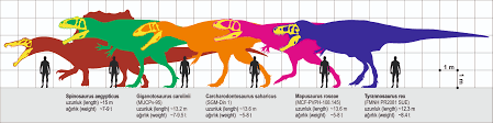 carcharodontosaurus size file 5 giant carnivores jpg wikimedia commons