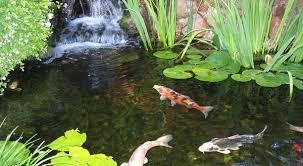 koi pond lighting ideas. 7 Ideas For Building A Koi Fish And Backyard Pond U2013 Home Gardening Lighting