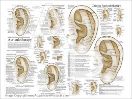 Auriculotherapy Chart Points
