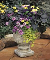 Small Picture Container Garden Design Foliage and Texture Proven Winners