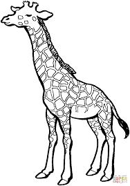 Leuke Giraffe Kleurplaat Gratis Kleurplaten Printen