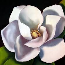 magnolia oil paintings of flowers nel s everyday painting may magnolia
