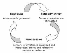 Sensory Processing Chart Sensory Processing And Sensory Integration Jenifer L Burke