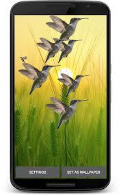 hummingbird live wallpaper 1 0 screenshot 1