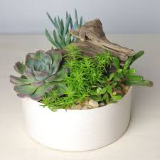 a succulent garden is both on trend and perfectly stylish as an