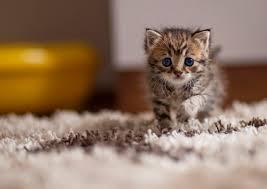 cute cat wallpapers for desktop 682 76 kb