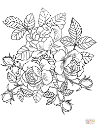 coloring roses flowers coloring page free printable coloring pages