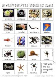 Card Game About Invertebrate Animals You Can Print Twice On