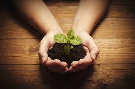 hands holding dirt and a plant overtop of eco friendly vinyl flooring